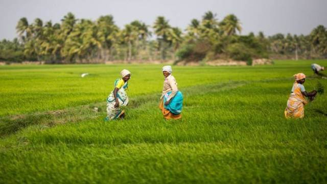 Agritech startup from Indonesia TaniGroup raised $10 Million in Series A Funding