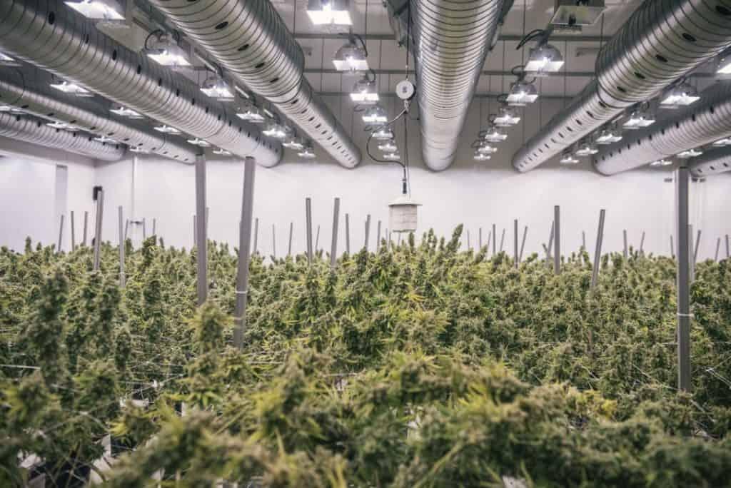 Canopy Growth Stock