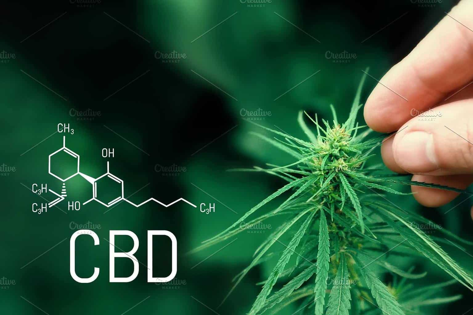 Best CBD Stocks to Buy in September