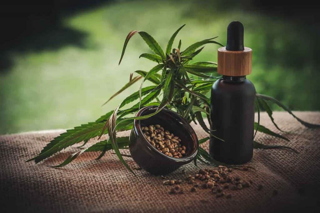 Aurora Cannabis Stock Price