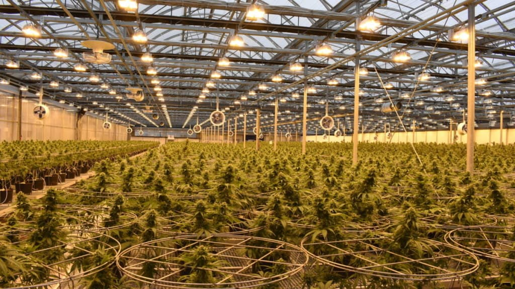 Hexo cannabis facility