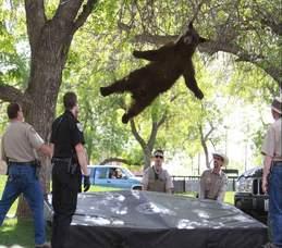 bond market bear