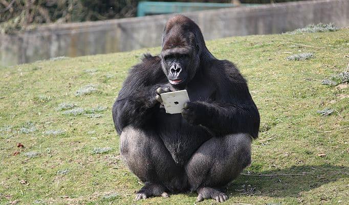 microsoft corporatin google inc blackberry ltd twitter inc